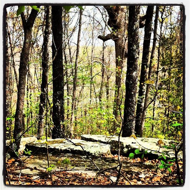 Woodspriestess (2/6)