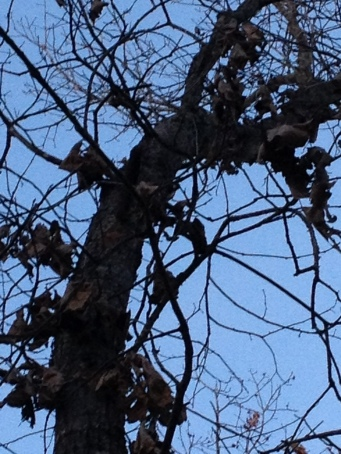 Can you see the little woodpecker?